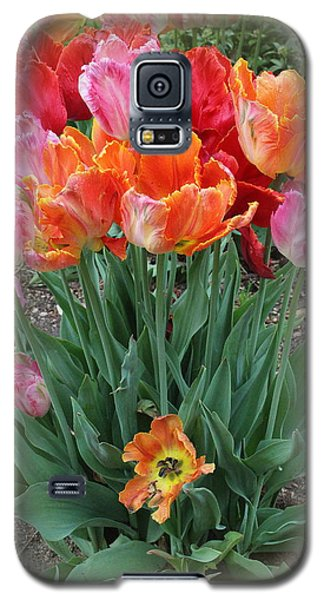 Bouquet Of Colorful Tulips Galaxy S5 Case