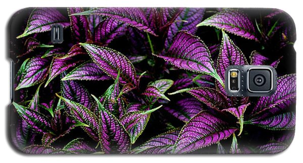 Bouquet Of Persian Shield Galaxy S5 Case