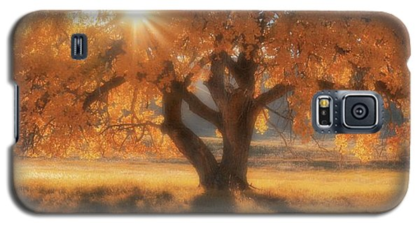 Boxelder's Autumn Tree Galaxy S5 Case