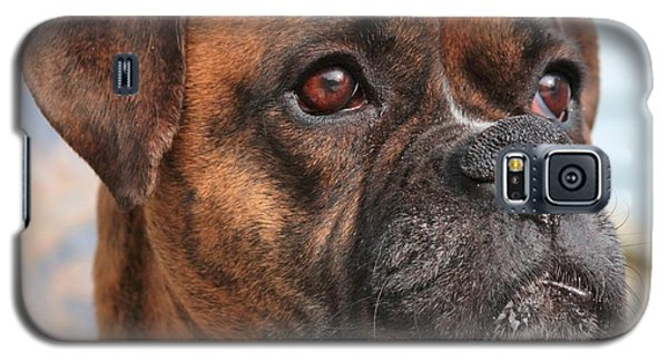 Galaxy S5 Case featuring the photograph Boxer Portrait by Debbie Stahre
