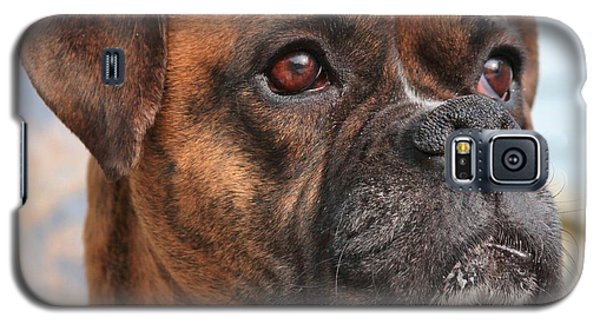 Boxer Portrait Galaxy S5 Case by Debbie Stahre