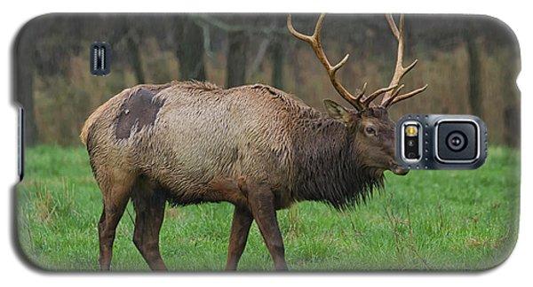 Boxley Elk Galaxy S5 Case