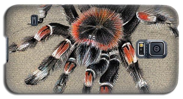 Brachypelma Smithi  Mexican Red Knee Tarantula Galaxy S5 Case