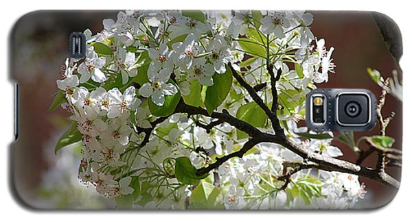 Galaxy S5 Case featuring the photograph Bradford Pear Blossoms 20120402_114a by Tina Hopkins