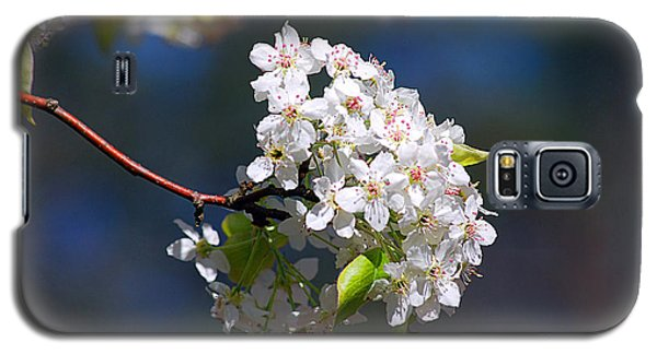 Galaxy S5 Case featuring the photograph Bradford Pear Blossoms 20120402_116a by Tina Hopkins