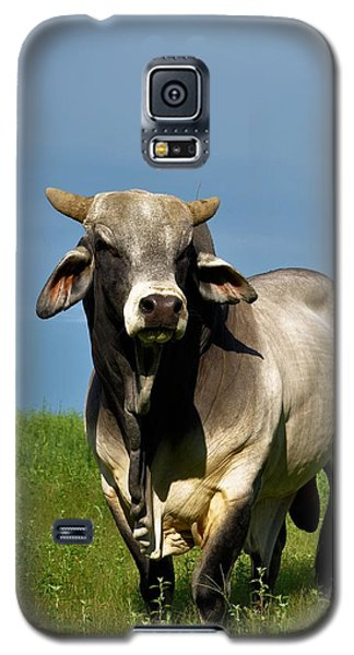 Galaxy S5 Case featuring the photograph Brahman Boss by Jan Amiss Photography