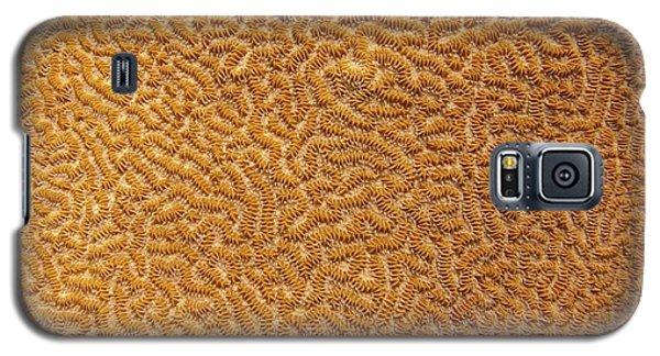 Brain Coral 47 Galaxy S5 Case
