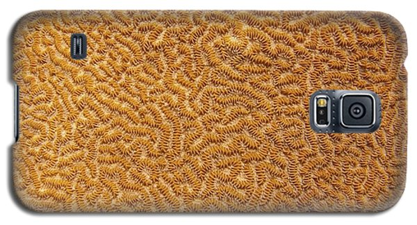 Brain Coral 47 Galaxy S5 Case