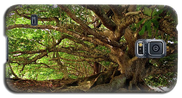 Branches And Roots Galaxy S5 Case by James Eddy