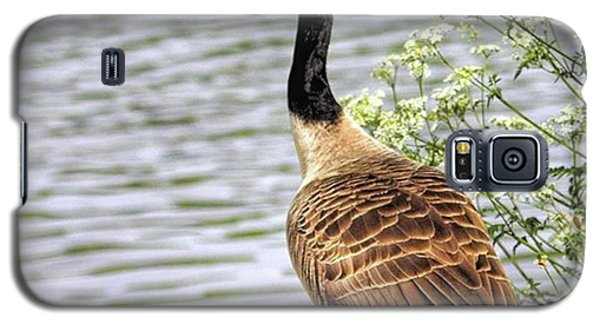 Galaxy S5 Case - Branta Canadensis  #canadagoose by John Edwards