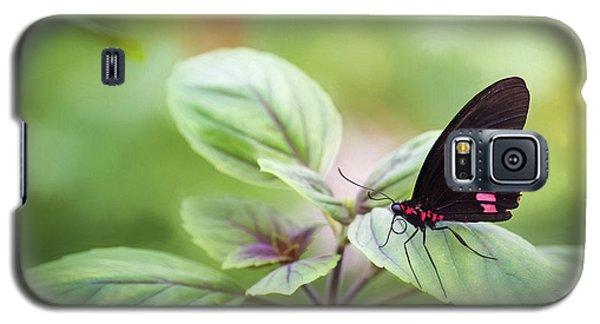 Brave Butterfly  Galaxy S5 Case