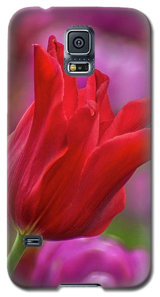 Galaxy S5 Case featuring the photograph Brazenly Delicate by Bill Pevlor