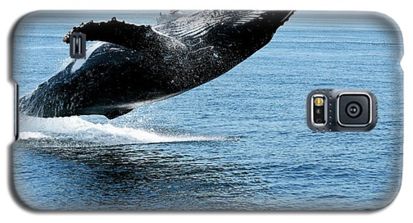 Breaching Humpback Whales Happy-2 Galaxy S5 Case