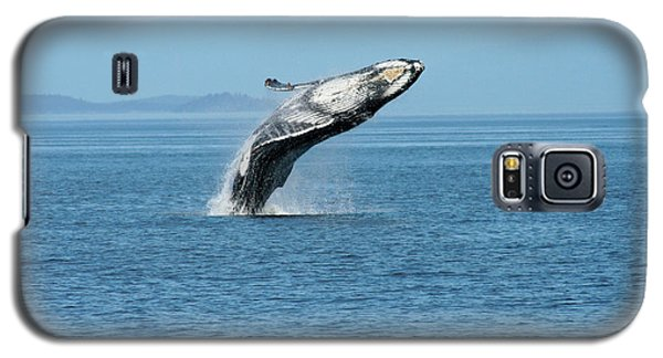 Breaching Humpback Whales Happy-3 Galaxy S5 Case