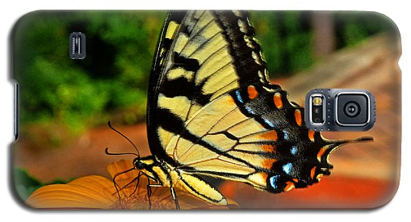 Galaxy S5 Case featuring the photograph Breakfast At The Gardens - Swallowtail Butterfly 005 by George Bostian