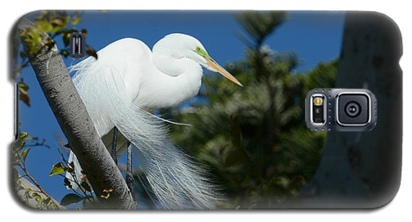 Galaxy S5 Case featuring the photograph Breeding Beauty by Fraida Gutovich