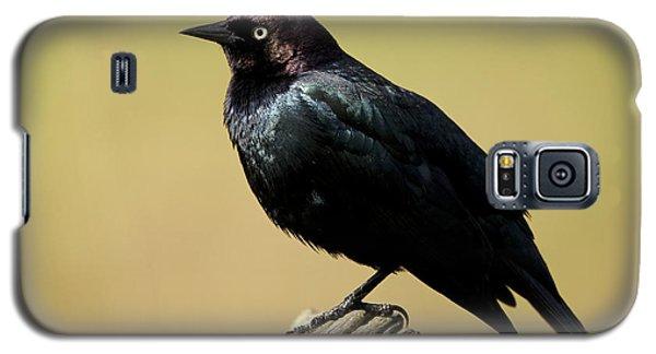 Brewers Blackbird Resting On Log Galaxy S5 Case