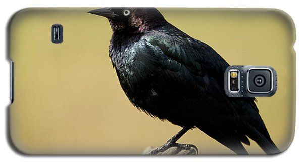 Brewers Blackbird Resting On Log Galaxy S5 Case