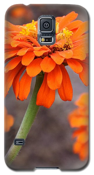 Bright And Beautiful Galaxy S5 Case by Kathy M Krause