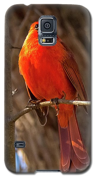 Bright Boy Galaxy S5 Case
