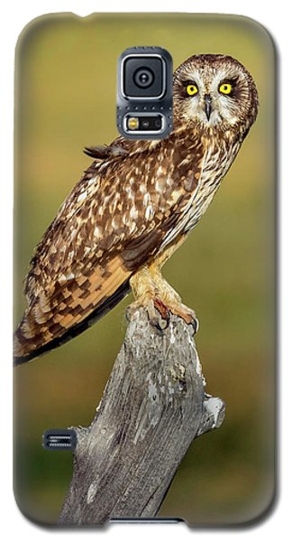 Bright-eyed Owl Galaxy S5 Case