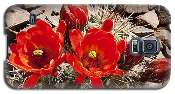 Galaxy S5 Case featuring the photograph Bright Orange Cactus Blossoms by Phyllis Denton