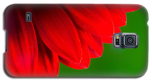 Bright Red Chrysanthemum Flower Petals And Stamen Galaxy S5 Case by John Williams