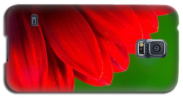 Bright Red Chrysanthemum Flower Petals And Stamen Galaxy S5 Case