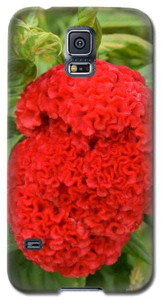 Bright Red Cockscomb Galaxy S5 Case