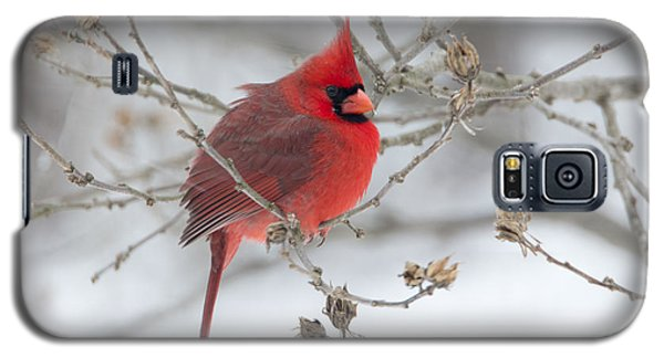 Galaxy S5 Case featuring the photograph Bright Splash Of Red On A Snowy Day by Skip Tribby