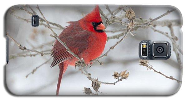 Bright Splash Of Red On A Snowy Day Galaxy S5 Case