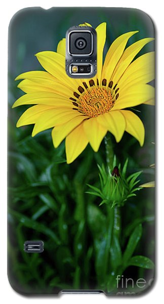 Galaxy S5 Case featuring the photograph Bright Yellow Gazania By Kaye Menner by Kaye Menner