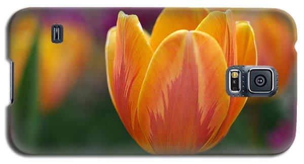 Brilliant Beauty Galaxy S5 Case by Linda Mishler