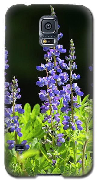 Galaxy S5 Case featuring the photograph Brilliant Lupines by Elvira Butler