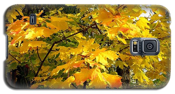 Galaxy S5 Case featuring the photograph Brilliant Maple Leaves by Will Borden