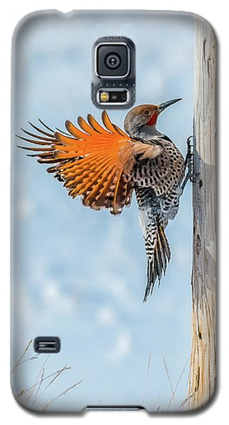 Brilliant Northern Flicker Woodpecker Galaxy S5 Case by Yeates Photography
