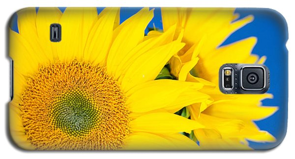 Brilliant Sunflowers Galaxy S5 Case