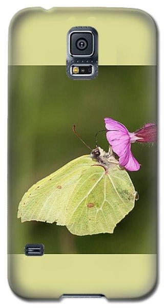 Brimstone Butterfly Galaxy S5 Case