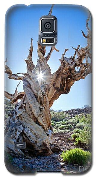 Bristlecone And Sun Galaxy S5 Case
