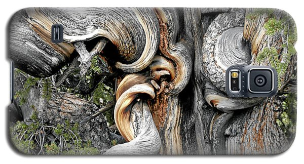 Bristlecone Pine - 'i Am Not Part Of History - History Is Part Of Me' Galaxy S5 Case by Christine Till