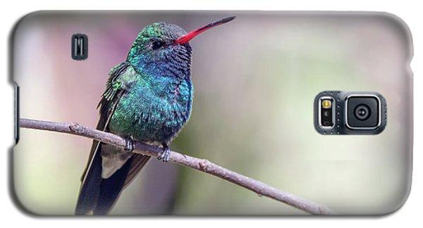 Broad-billed Hummingbird 2008-031718-1cr Galaxy S5 Case