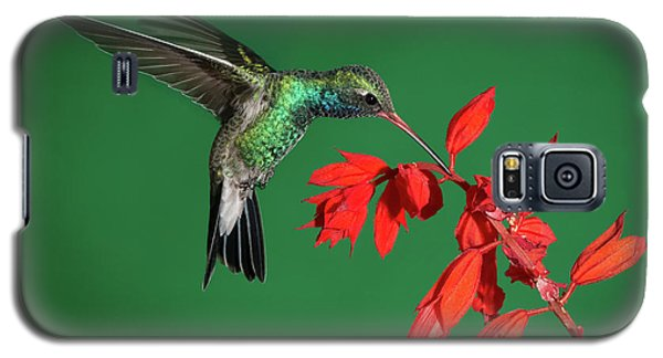 Broad-billed Hummingbird  Galaxy S5 Case