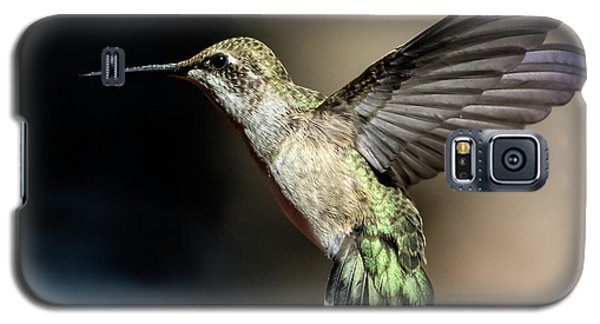 Broad-tailed Hummingbird Female Galaxy S5 Case