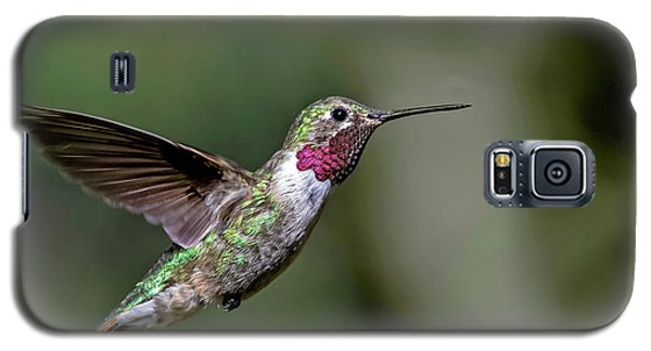 Broad-tailed Hummingbird Male Galaxy S5 Case