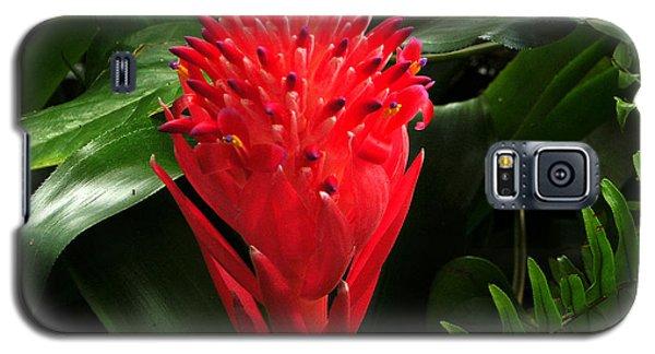 Bromeliad 9-18-15 Galaxy S5 Case