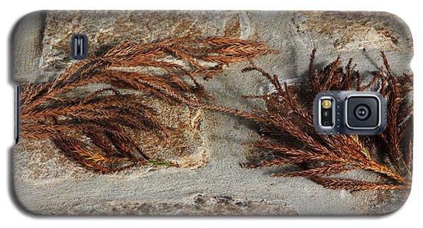Galaxy S5 Case featuring the photograph Bronze Symmetry by Deborah  Crew-Johnson