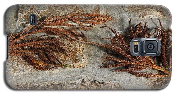 Bronze Symmetry Galaxy S5 Case by Deborah  Crew-Johnson