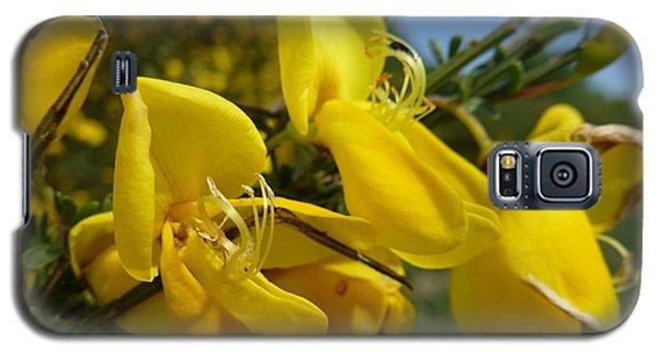 Broom In Bloom 3 Galaxy S5 Case