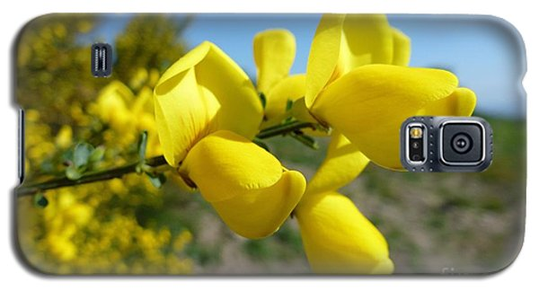 Broom In Bloom 4 Galaxy S5 Case by Jean Bernard Roussilhe