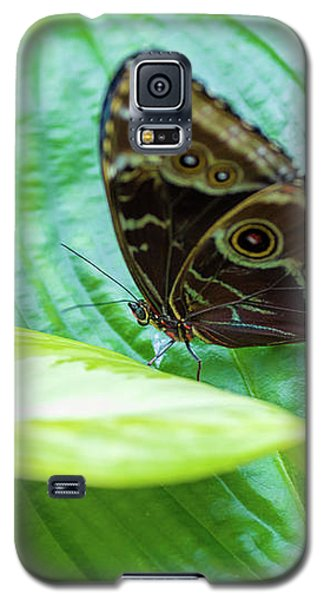 Brown And Blue Butterfly Galaxy S5 Case